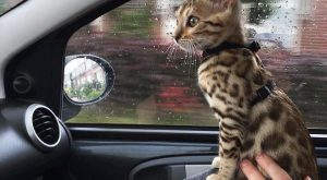 17+ Cutest Kittens that bring smiles