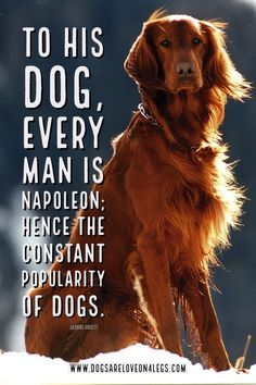 Dog Quote – To his d Dog Quote – To his dog every man…