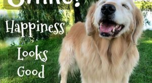 "Smile! Happiness looks good on you! #quote explore Pinterest""> #quote #goldenretriev..."