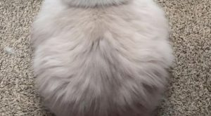 "Terrific – Cute Baby Cats Drawings xx #ragdollcatsdrawing explore Pinterest""> ..."