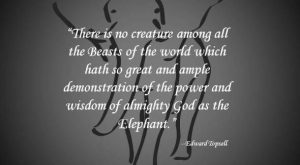 "Elephant Quotes #ivoryforelephants search Pinterest""> #ivoryforelephants #stoppoachi..."