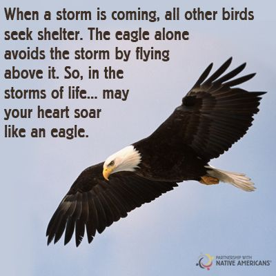 Photo: May you soar like an eagle today! Partnership With Native Americans Google+ #native...