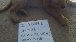 I pooped in the heater vent. Now the WHOLE House smells like poop!!! :(…
