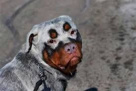 Image result for strangely colored dogs