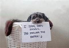 "Smelly socks! #dogsfunnyshaming explore Pinterest""> #dogsfunnyshaming"