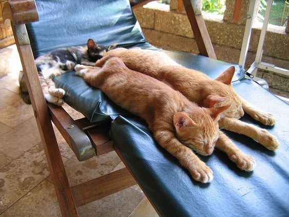 Long And Stretchy Cats Are Taking Long And Snoozy Naps | CutesyPooh