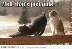 These Funny Cat Phot These Funny Cat Photos provide that humour break for when…