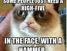 Enjoy amusing animal memes that include cat memes, your preferred dog memes, amusing squir...
