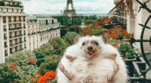 21 Animals Having the Best Day Ever | CutesyPooh