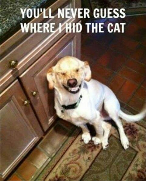 he hid the cat in the cabinet, Cat: GET ME OUT OF HERE!!!!! Dog:…