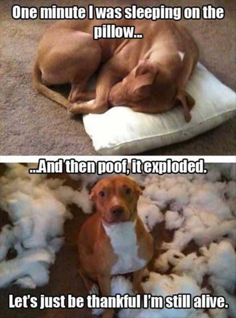Funny pictures | Funny Pictures . more here