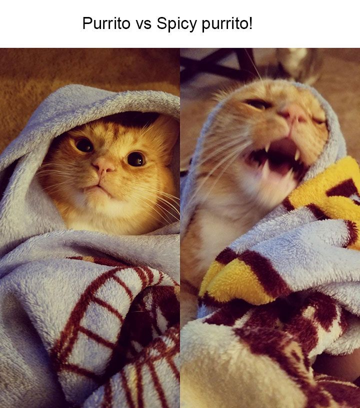 24 Funniest Animal Pictures With Captions You Have Seen On The Internet
