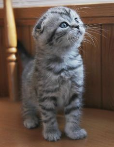 """Hello there bright people. Are you looking #petlover explore Pinterest""""> #petlover or have you…"""