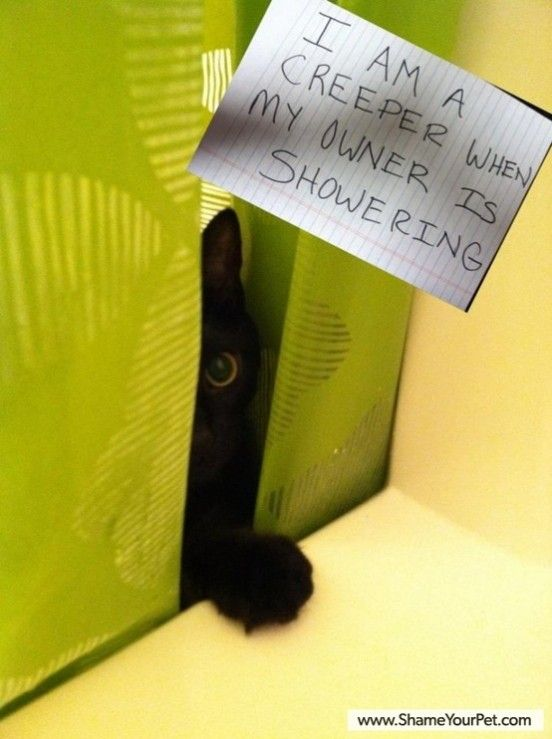 The best of cat shaming – Part 3 – FB Troublemakers