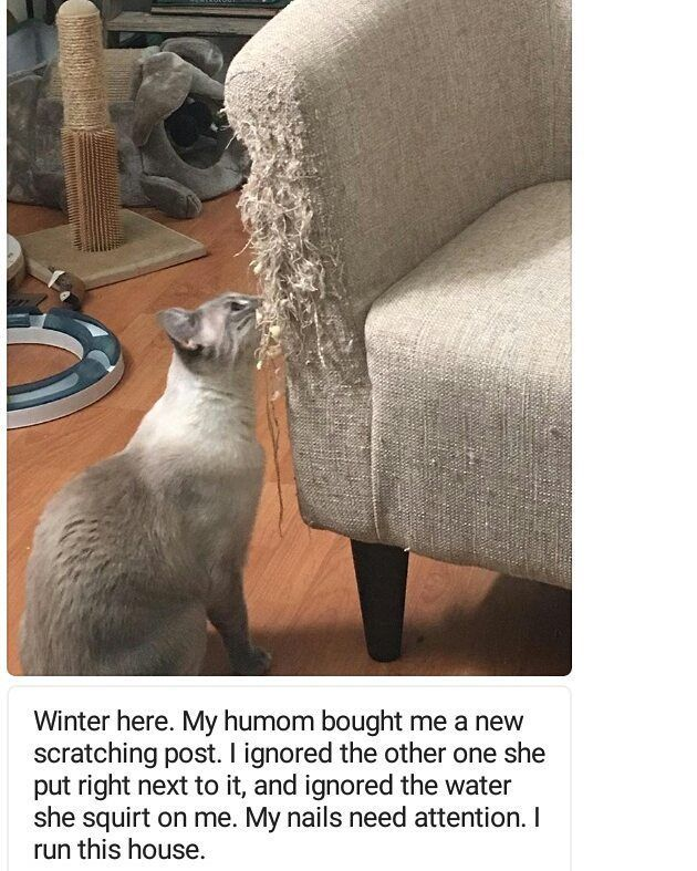 """Submitted by @seasidecali #cat explore Pinterest""""> #cat #cats explore Pinterest""""> #cats #catsofinstagram explore Pinterest"""">…"""
