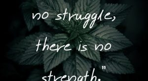 "Short Strength Quotes – ""Where there is no struggle, there is no strength"" –…"