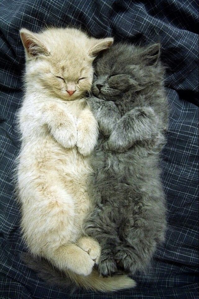 8 Lovely Cute Cats Pictures More