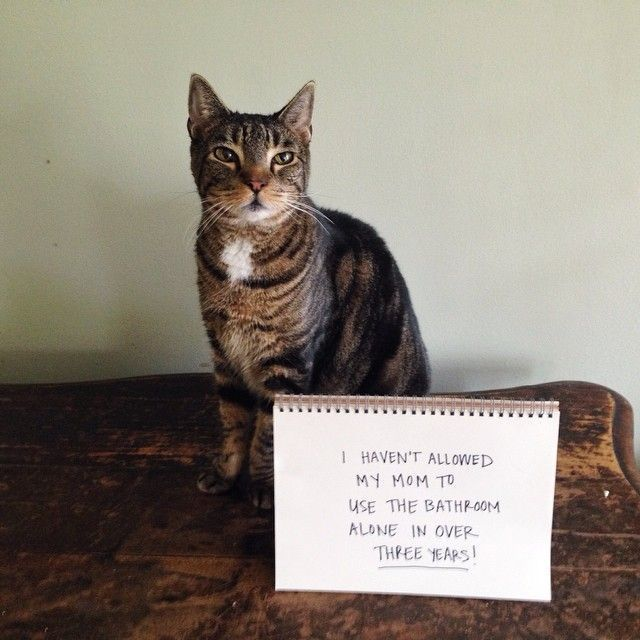 The meowbox Ultimate Top Ten Cat Shaming List