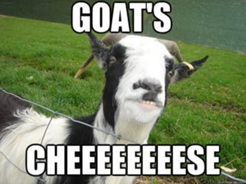14 Goat Quotes For Every Occasion