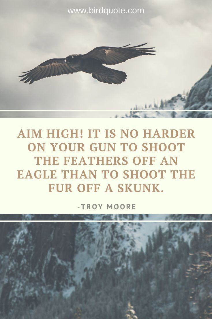 Aim high! It is no harder on your gun to shoot the feathers off…
