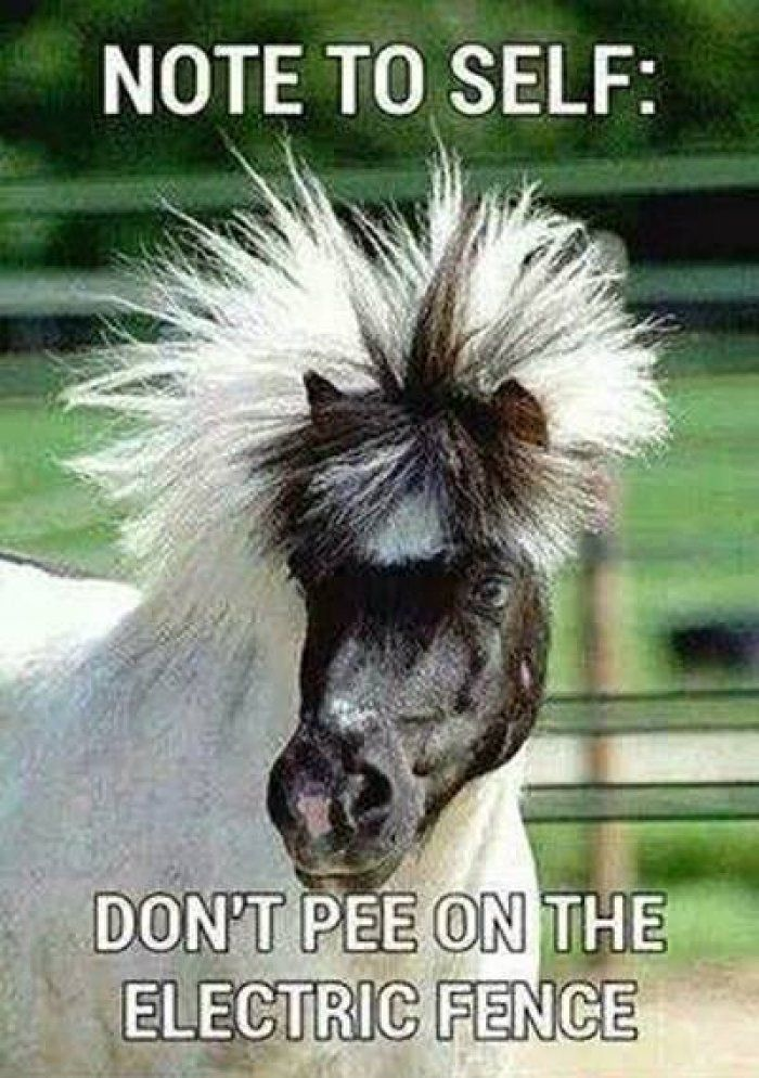 funny horse quotes – Google Search