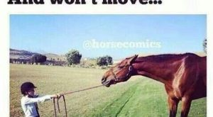 16 Funniest Horse Memes In The Barn