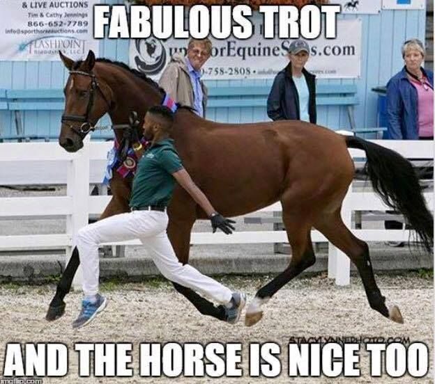 Fabulous trot & the horse is nice too! –
