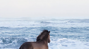 Pictures Of Fairytale Wild Horses Living In Iceland Conditions #wild explore Pinterest&#82...