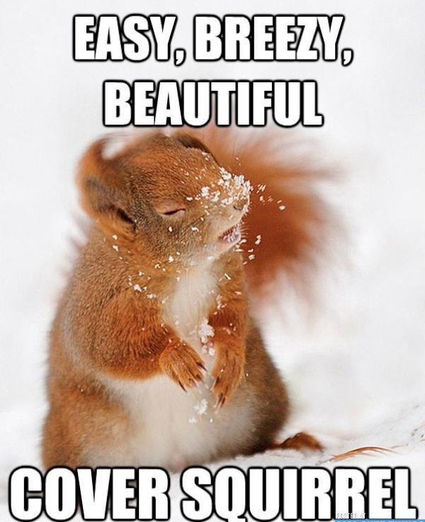 "Cover Squirrel #Cover search Pinterest""> #Cover, #Squirrel search Pinterest&#8221..."