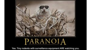 Demotivational Squirrel Poster: Paranoia Poster $ by poozybear The post Demotivational Squ...