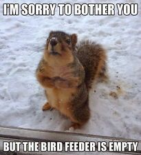 """Find great deals for Funny Squirrel Animal (Square) Photo Fridge Magnet """""""" Col..."""