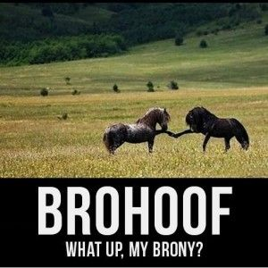 Image result for horse shaming –