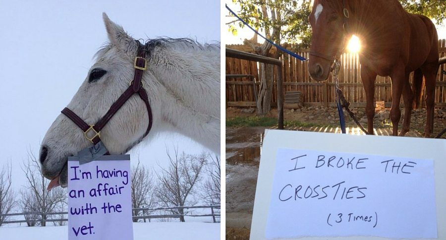 Clearly these horses just couldn't help their naughty behavior, and these horse sham...