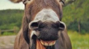"#cute explore Pinterest""> #cute #donkeys explore Pinterest""> #donkeys #animals..."