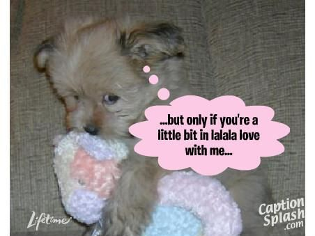 Funny Dogs with Captions | Very funny dog pictures with captions 'n' funny dog...
