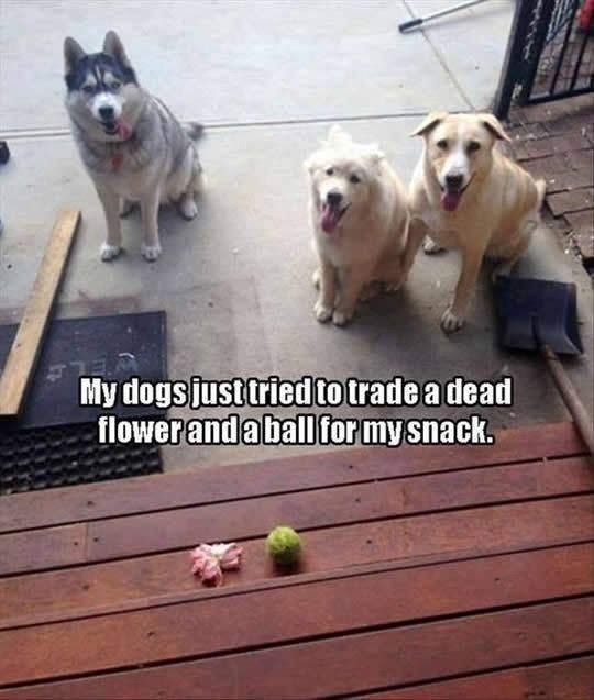 """Pic pf three dogs with the caption, """"My dogs just tried to trade a…"""