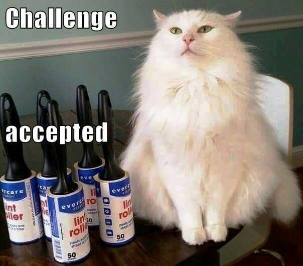 Challenge accepted lint brush