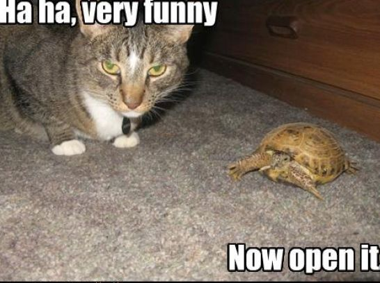 Very Funny Pictures with Captions | Very funny cats with captions pictures 2