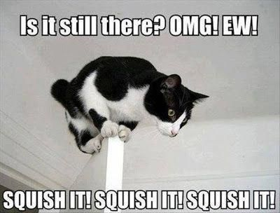 Posters And Gifts For Cat Lovers: Funny Cats With Captions #cathumor explore Pinterest&#82...