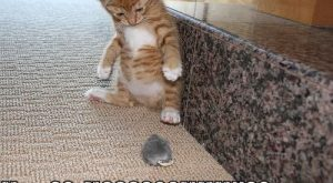 Really Funny Cats with Captions | Very Cool Funny Cat Pictures with Captions #KittenPictur...