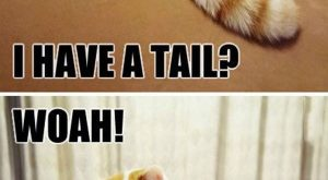 Fun Claw – Funny Cats, Funny Dogs, Funny Animals: Funny Animal Pictures With Caption...