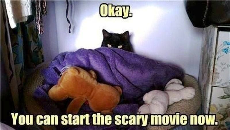 Okay you can start the scary movie now