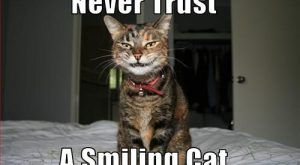 Funny Cat Pictures with Captions | Funny photos of cats, cute cats pictures, funny…
