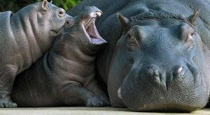 25 Animal Moms Who Have Had Enough of their Children