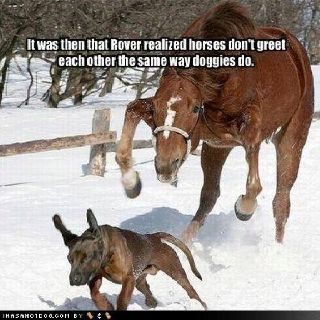 """Funny horse pic More #dogfunny explore Pinterest""""> #dogfunny"""