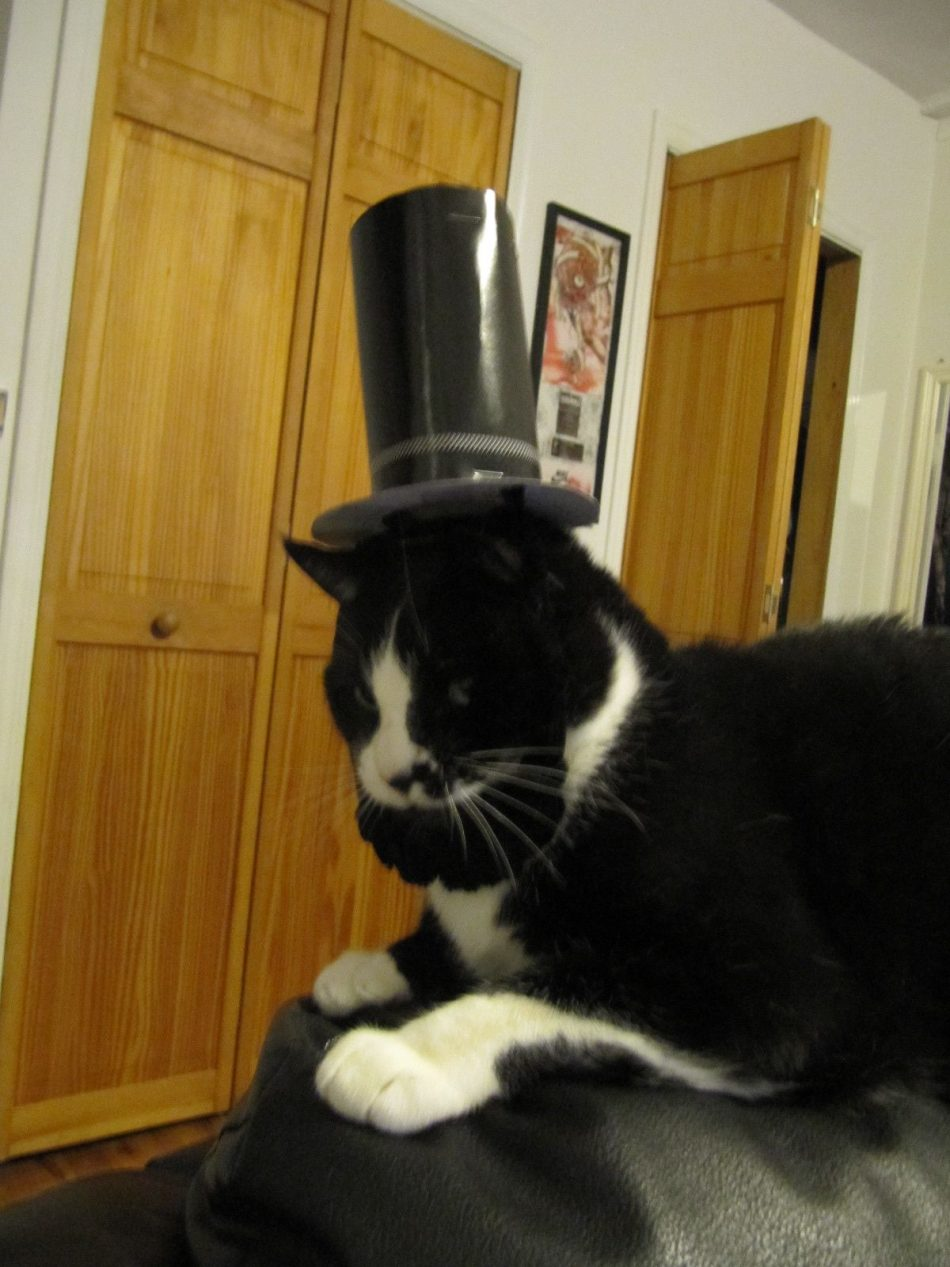 Funny Halloween Cat | Funny Image Collection: Cat Halloween Funny Pics with Funny Captions...