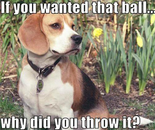 You have to own a Beagle to understand the full impact of this statement…