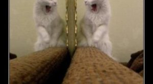 cat pics with funny captions | … All Funny Animal Pictures With Captions Very…