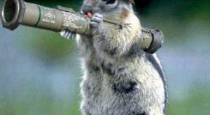 Bazooka Squirrel Meme | YOU DO NOT WANT TO TAKE THIS SQUIRREL NUTS |…