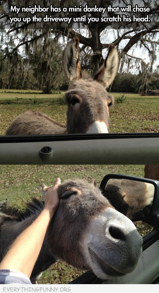 funny have to pet the donkey pic